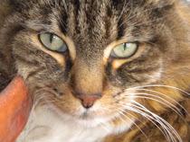 In Memorian Sammie +22.12.11