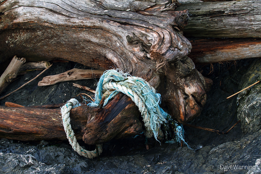 Driftwood and Flotsam