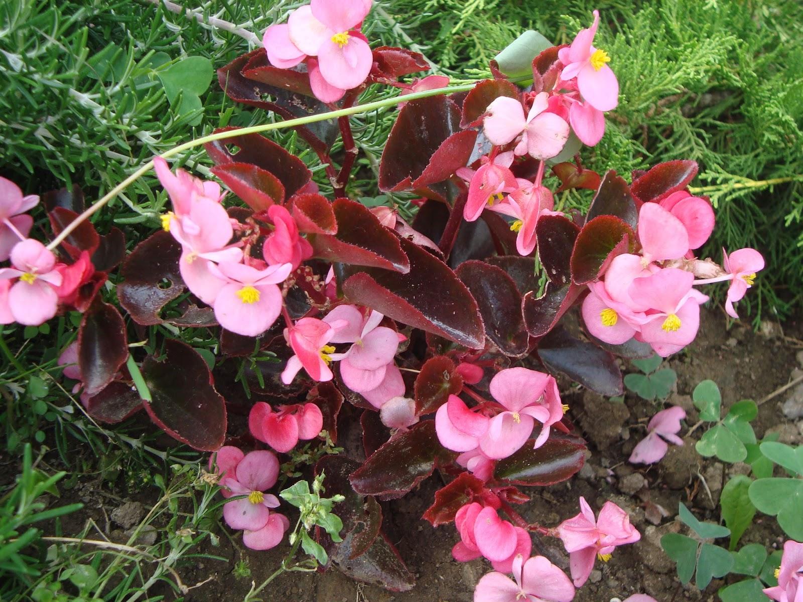 Floresamatxo todo sobre las flores consejos para cuidar - Variedades de plantas de interior ...