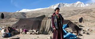 herder in Ladakh