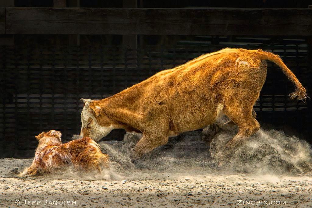 Stunning HDR Animals by Jeff Jaquish