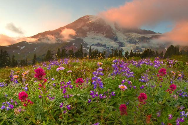 Hình ảnh hoa đẹp 19
