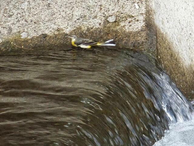 水を浴び、羽繕いしている姿。