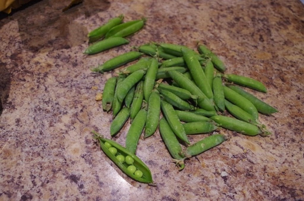 peas - about to be eaten!