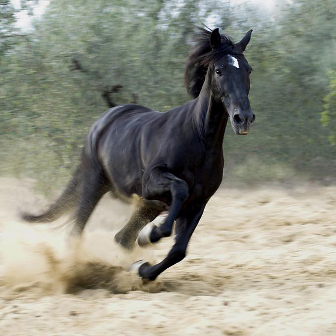 horse amazing facts new pictures the wildlife. Black Bedroom Furniture Sets. Home Design Ideas