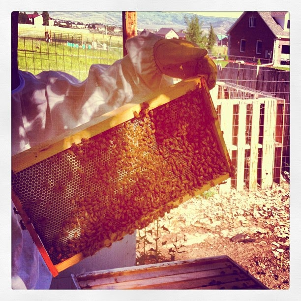 Wild Edibles ~ Beekeeping | Culinary Craftiness