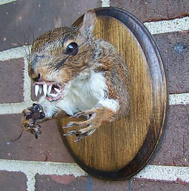 Mighty Lists: 10 hilarious taxidermy pictures