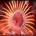 Amazing Fireworks Display 2015