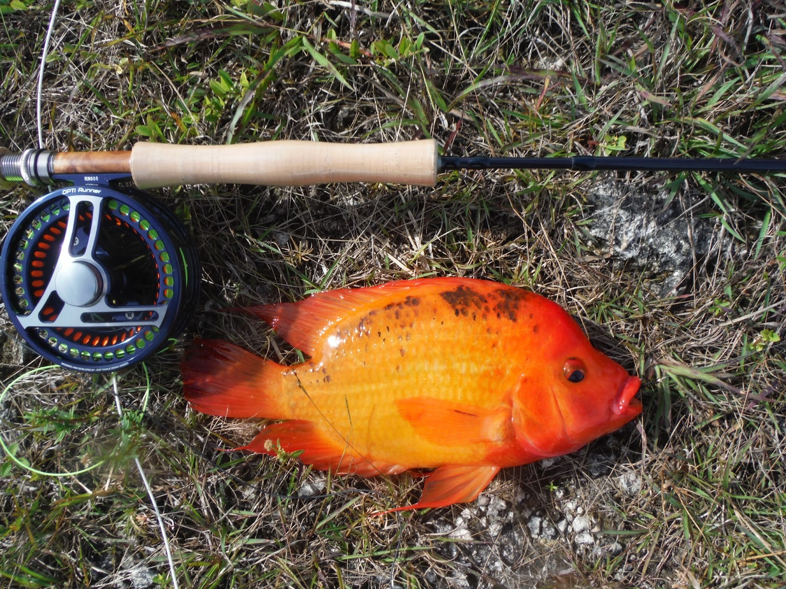 Fly fishing the west with howard midas cichlids turtles for Fish of florida