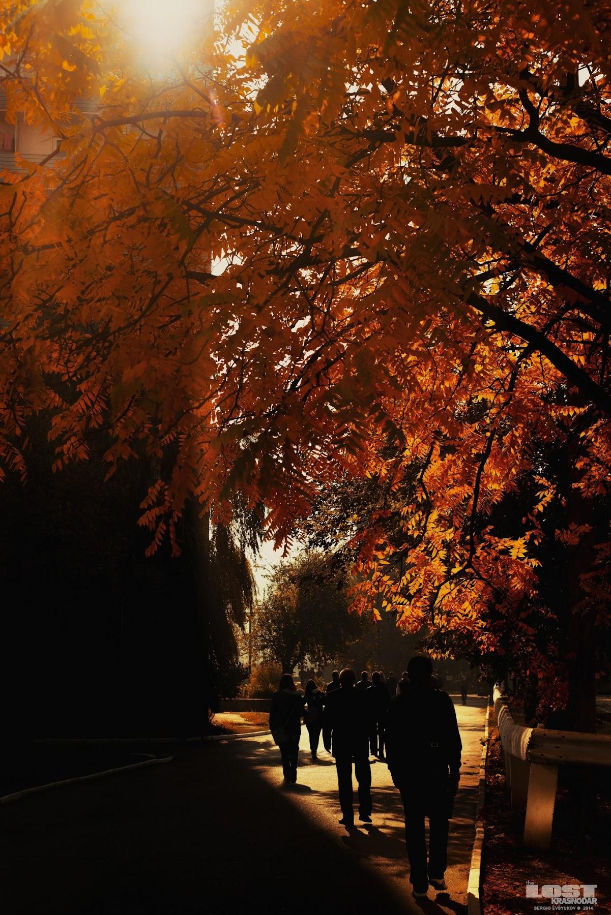 Люди и пожелтевшее дерево в студенческом городке КубГТУ