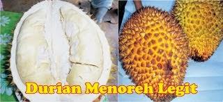 Durian Menoreh Alkoholik - Durian Promasan