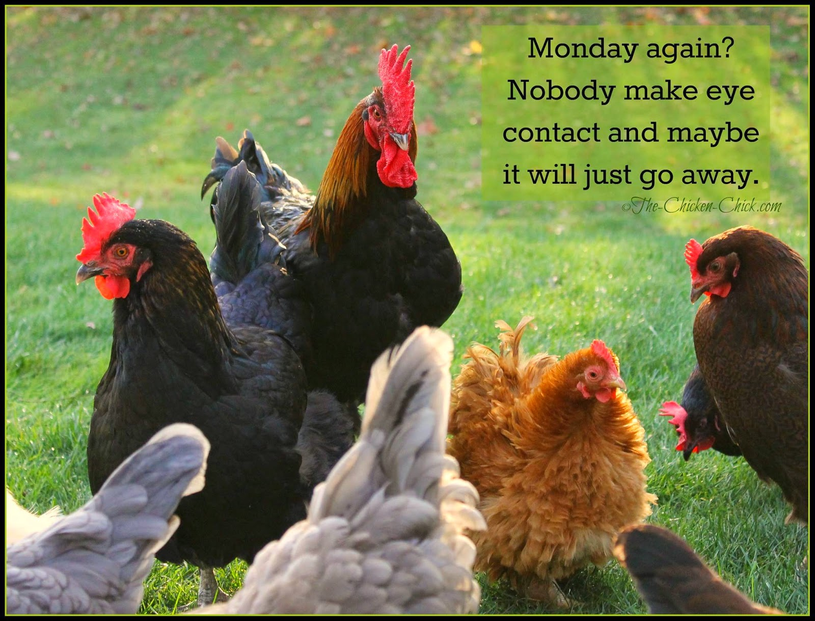 Monday again? Nobody make eye contact and maybe it will just go away.