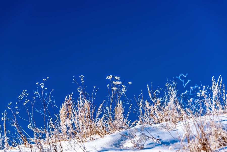 Прогулка по морозу
