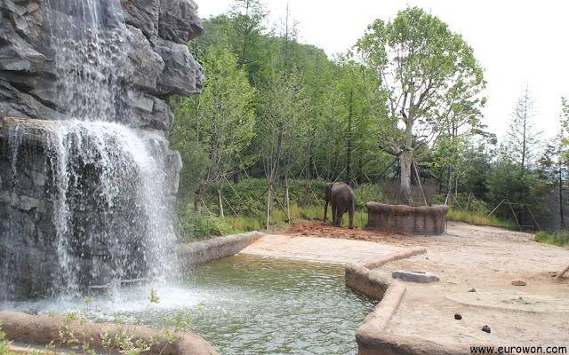 Elefante triste en el parque de atracciones Everland