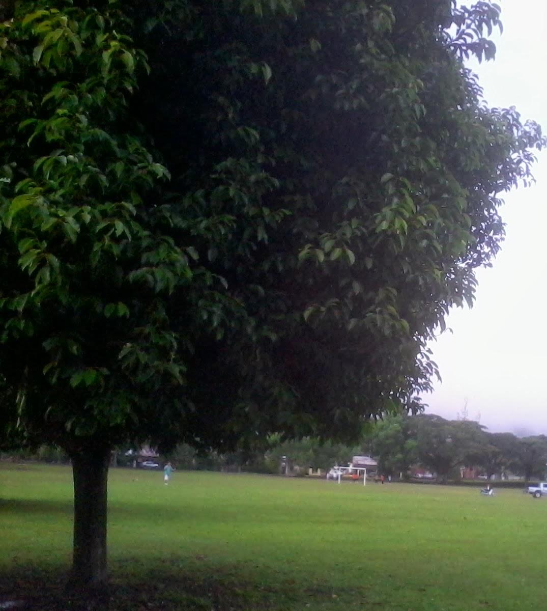 第一眼看到就喜欢这棵树