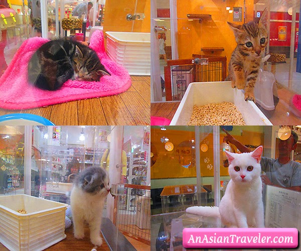 pet shop (cats)