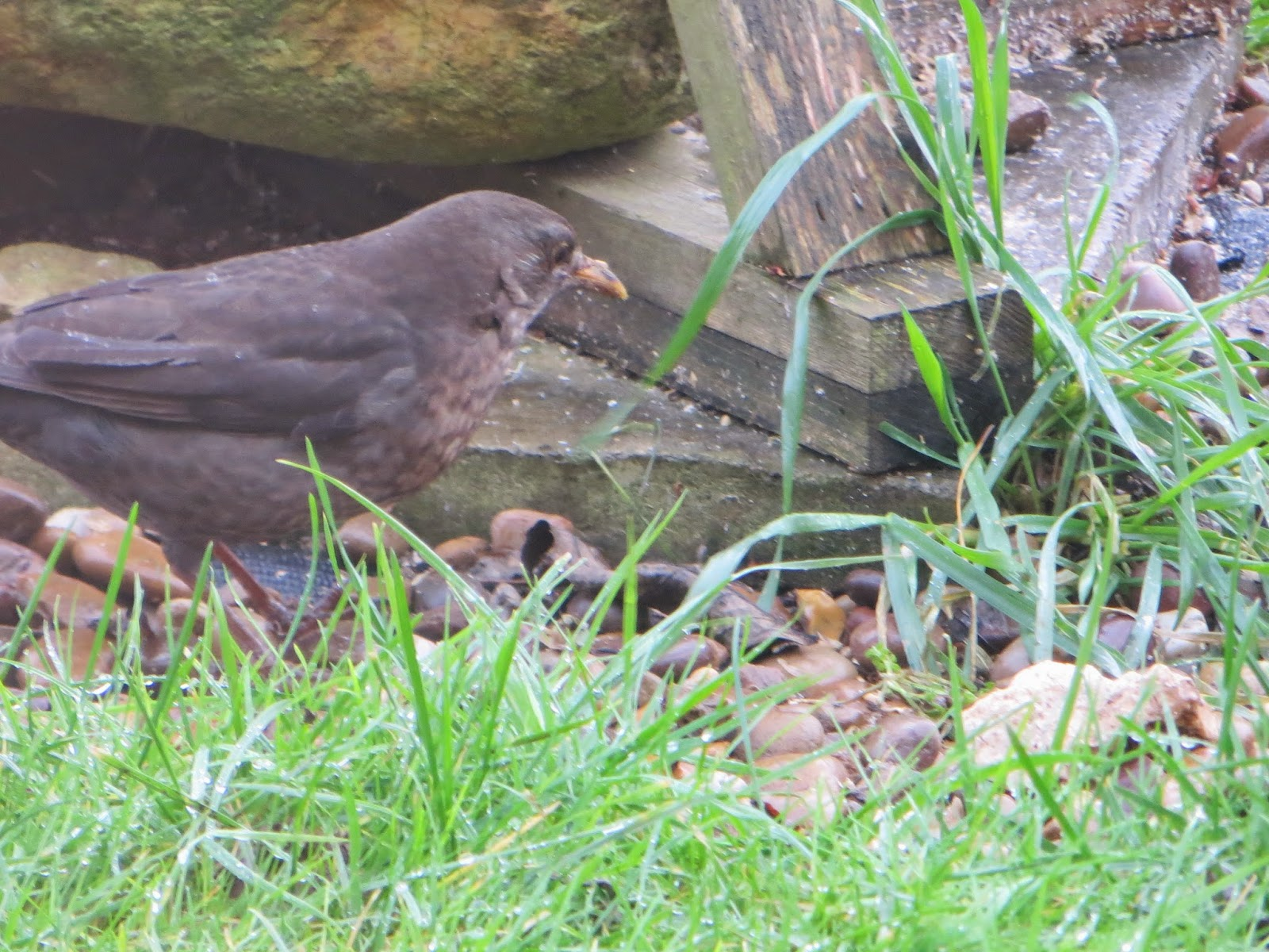 is it a thrush??