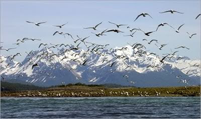 Burung Hewan Parameter Cuaca
