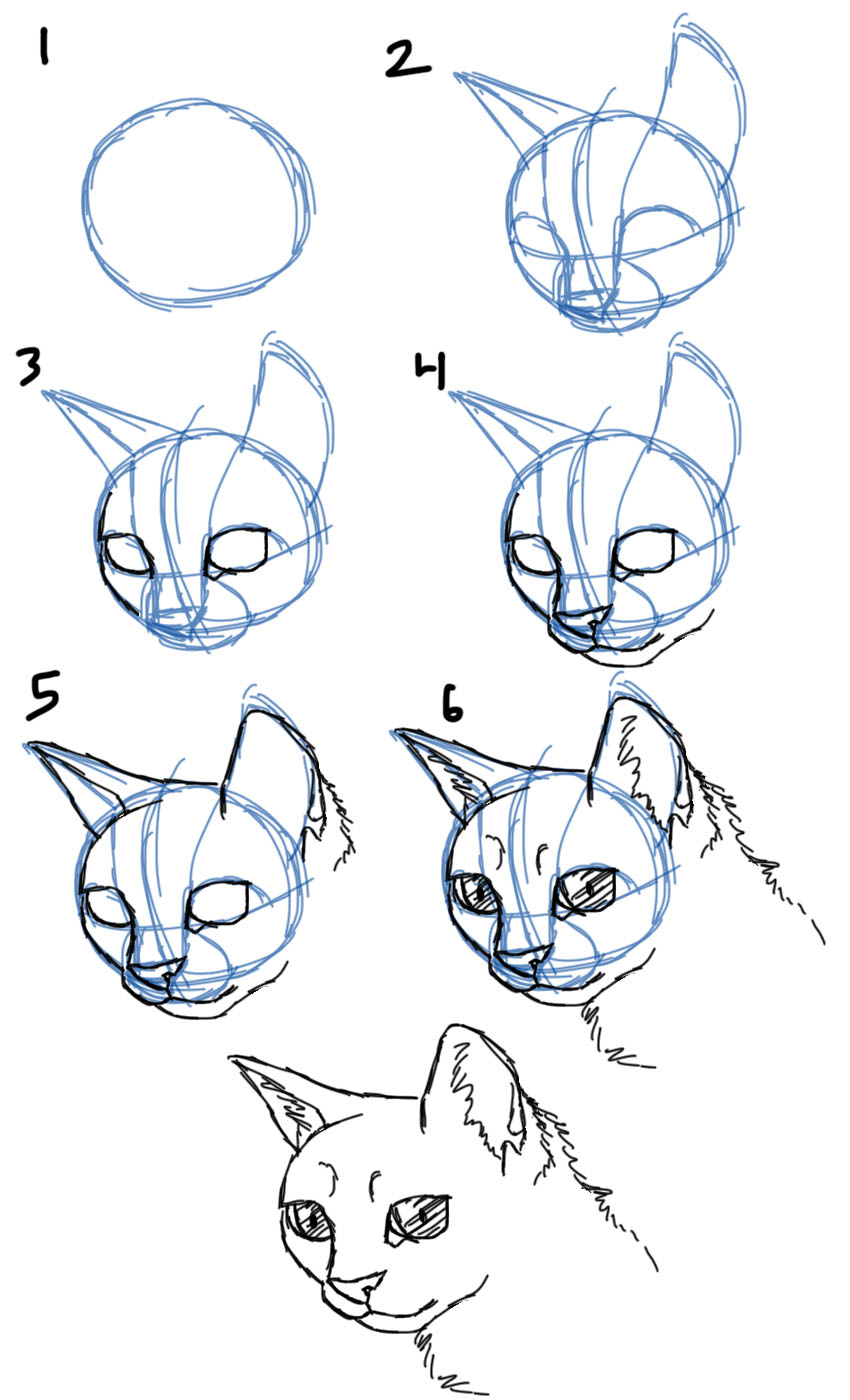 How To Draw Cat Faces Heads 3 4 View