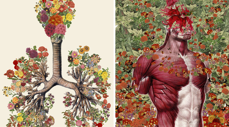 Collages anatómicos Travis Bedel ciencia cuerpo humano