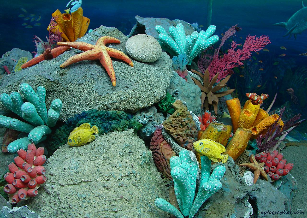salim khoso deep sea creatures marine aqua life