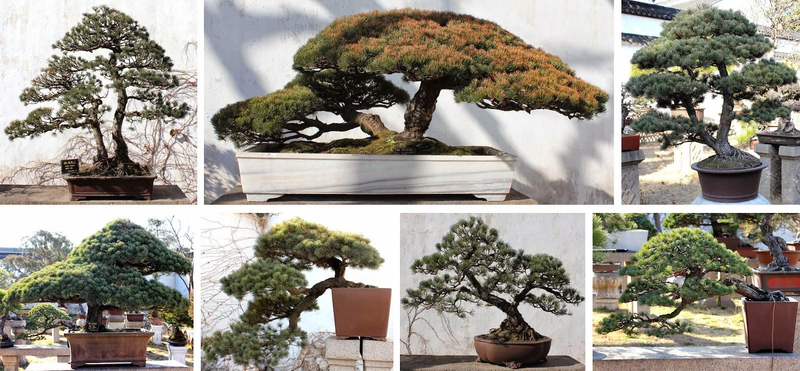 Kigawa39s Bonsai Blog Penjing Garden At The Humble Administrator39s