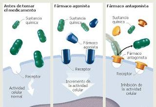 Modo de acción de los fármacos
