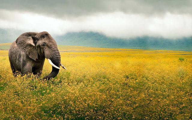 Foto olifant tussen de bloemen