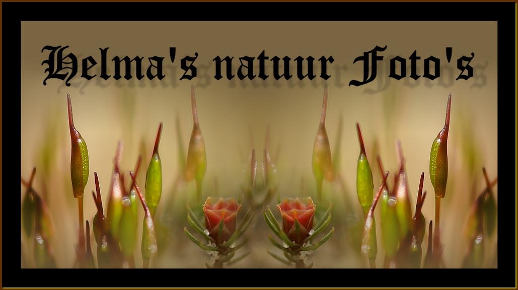 Helma's natuurfoto's