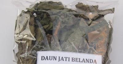 Teh Herbal Daun Jati Belanda (Guazauma Ulmifolia) ~ Teh ...