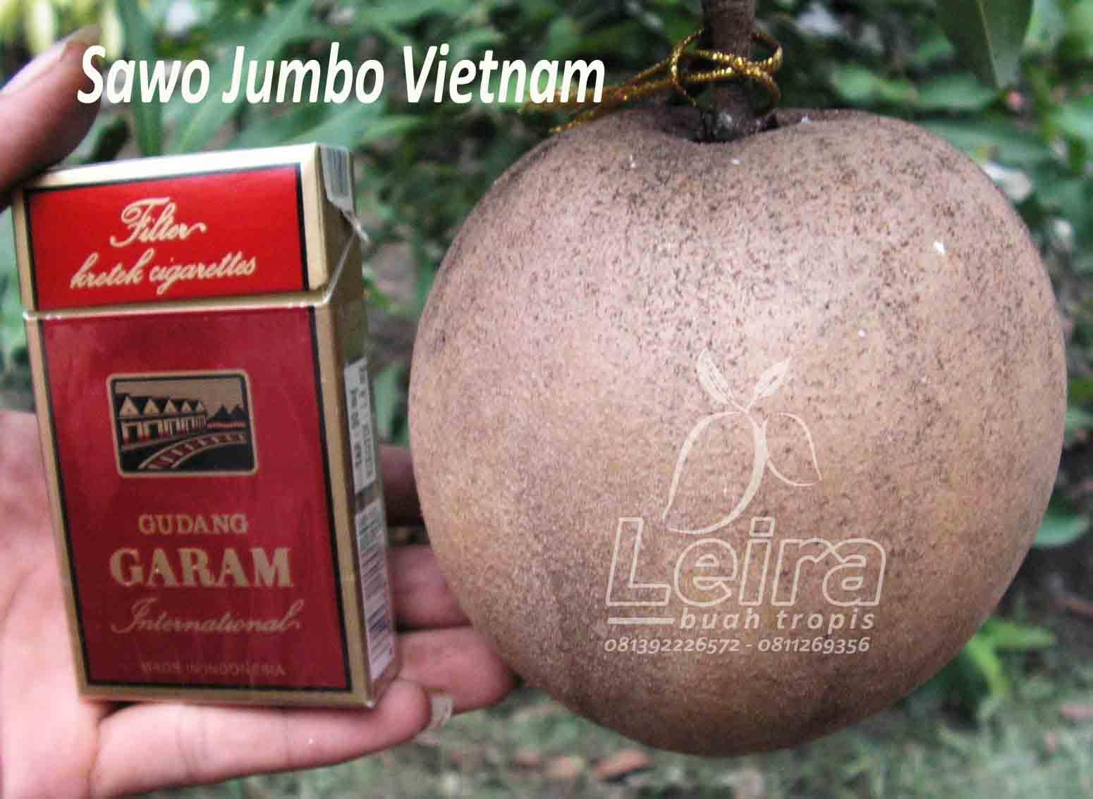 Sawo Jumbo Vietnam ~ Leira Buah Tropis