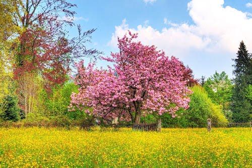 Jardín y árbol con flores de colores - Garden and Tree