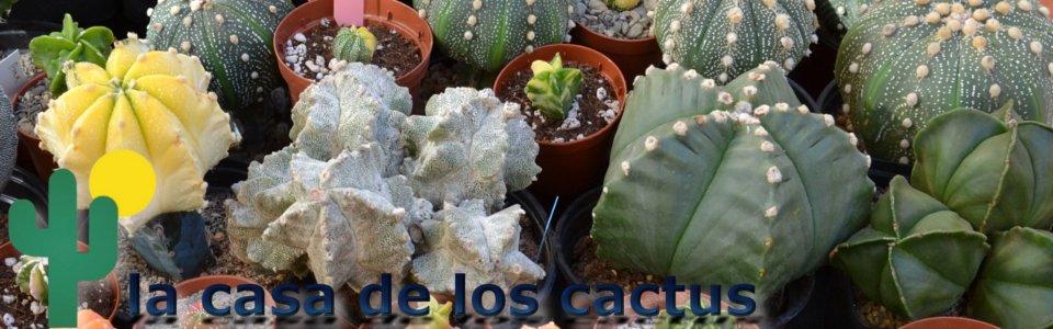 La casa de los cactus