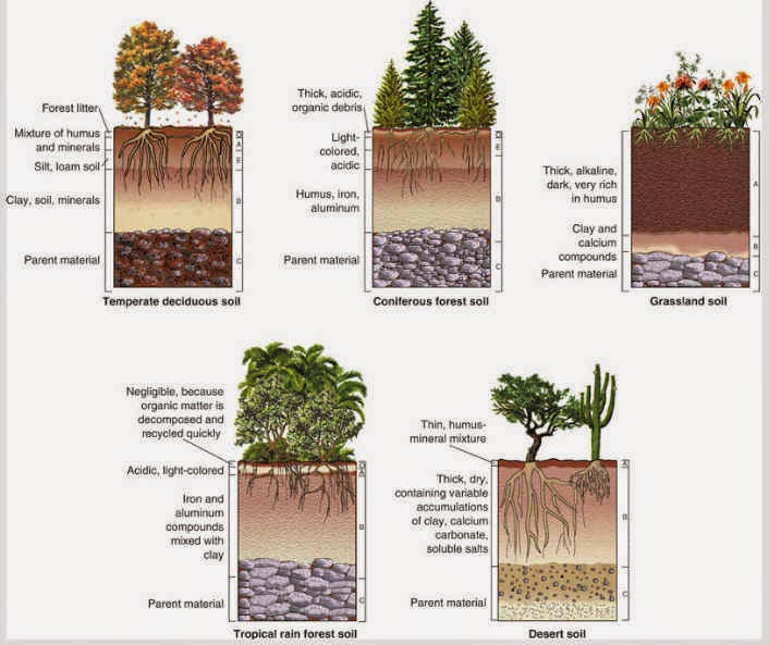Rufinos 2 ciclo for What are the different layers of soil