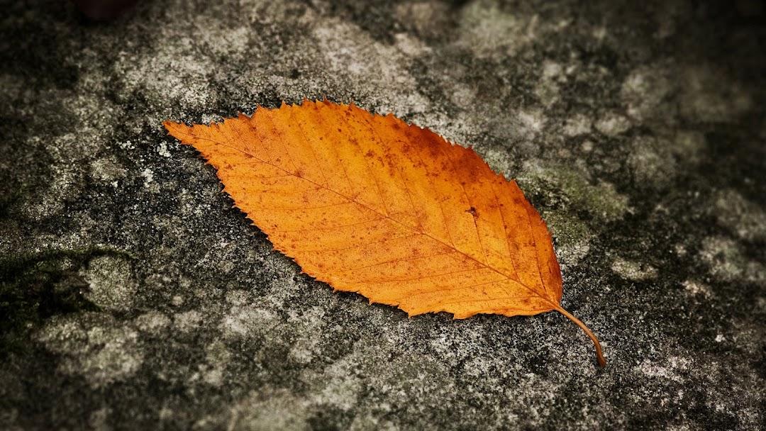 Leaves Macro HD Wallpaper 4
