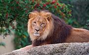 . guepardo imagenes de animales