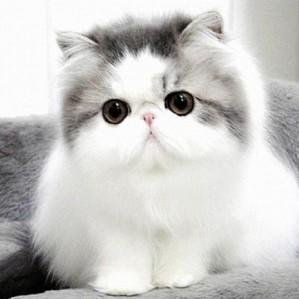 Benarkah Kucing Penyebab Asma
