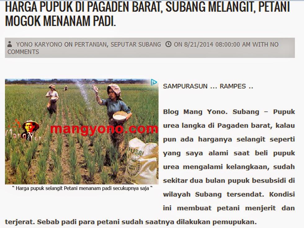 Harga pupuk di Pagaden Barat, Subang melangit, petani mogok menanam padi.