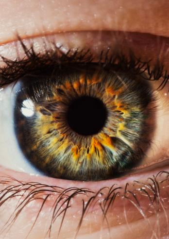 vista art projects eye human iris patterns form shape. Black Bedroom Furniture Sets. Home Design Ideas
