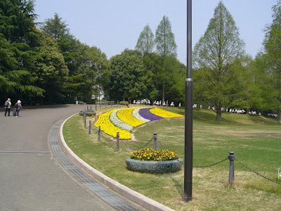 大阪府・万博記念公園 パンジー