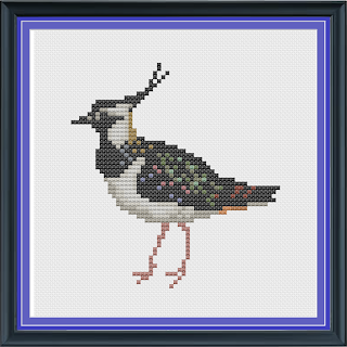 lapwing_coloured.png