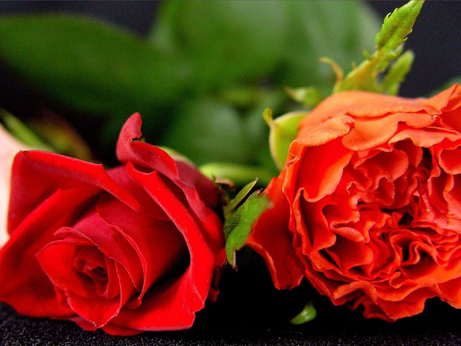 Natural Roses Meaning Of Red Roses