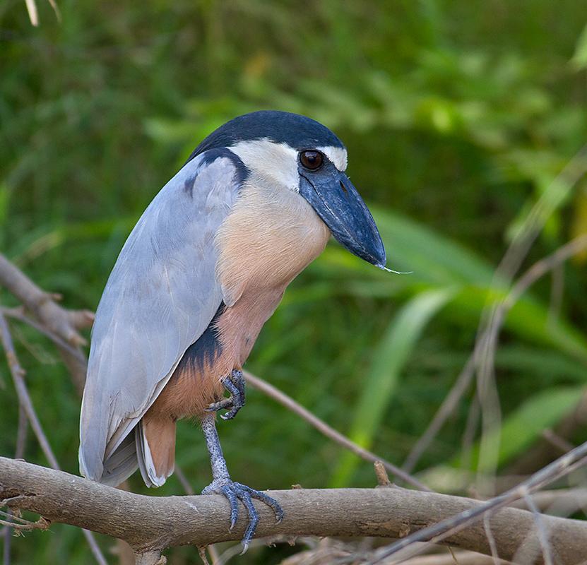 Lost in Birding: Cruisin'...COSTA RICA (22 Feb)