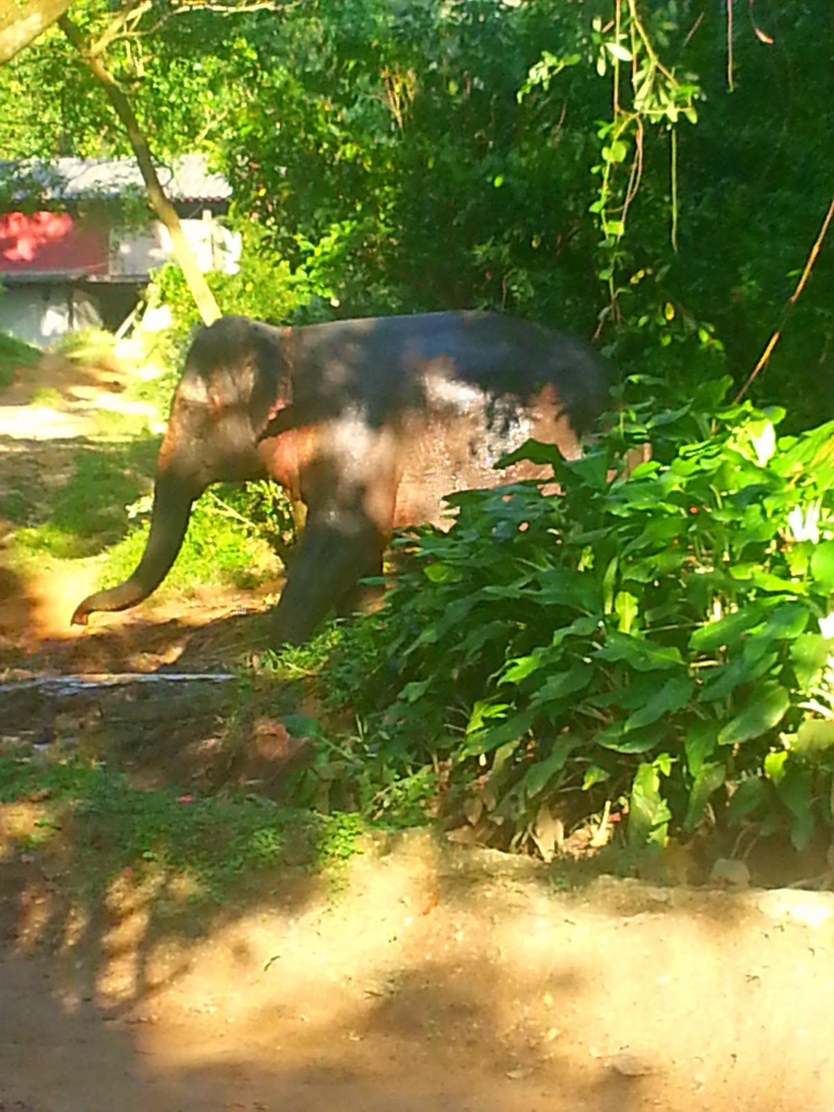 Kok Chang Elephant Trekking - Kata