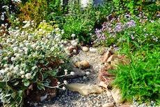 A California Native Perennial Garden