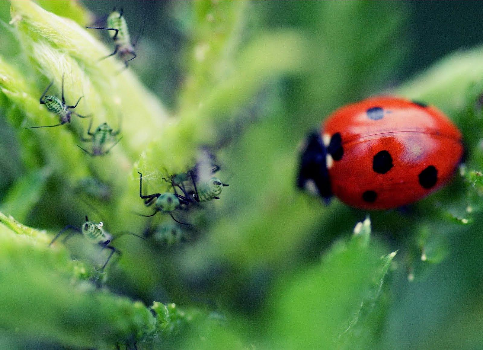idool Fotos de insectos más cerca de lo que tú te imaginas VII ...