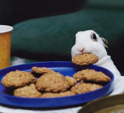 conejo+comiendo+galleta Imagenes de conejos..
