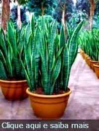 Plantas Protetoras
