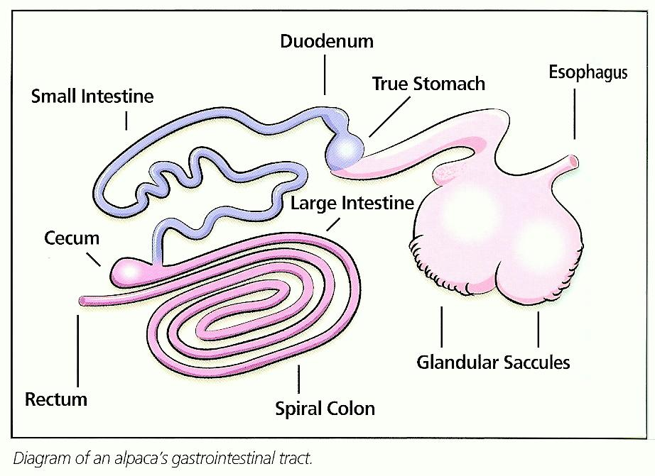 What Are the Three Main Functions of the Digestive System?