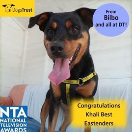 http://www.dogstrust.org.uk/rehoming/dog/1060287/bilbo#.Ut_4cLTFIr0